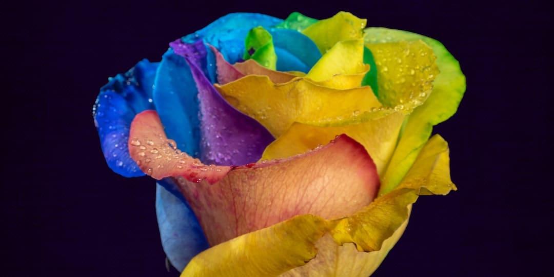 Aybel Teinture FAQ Tye Dye Dip Dye Batik brad-switzer-iRRRsz7jj3M-unsplash