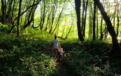 La Aybel Teinture est-elle sûre et écologique?